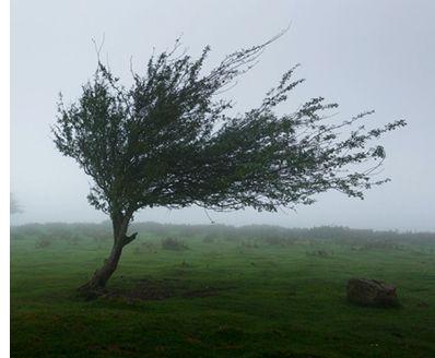 tree crisis